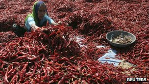 A woman removes stalks from red chilli at a farm in Shertha village on the outskirts of the western Indian city of Ahmedabad, Gujarat state - February 15, 2012