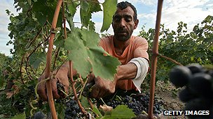 Farm worker in Macedonia