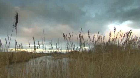 Avalon Marshes
