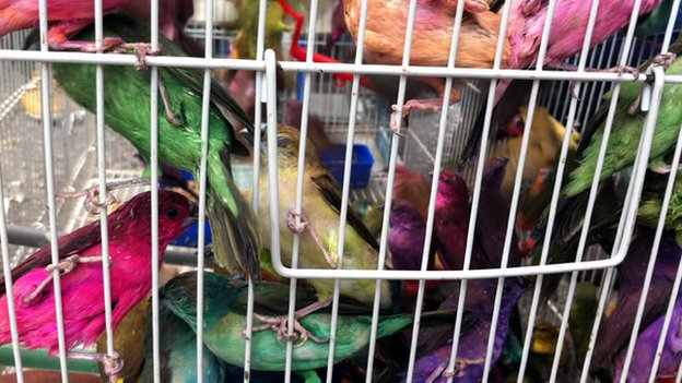 Birds for sale in Tripoli market