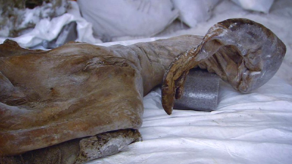 Juvenile Yuka mammoth head and trunk (c) BBC/Discovery