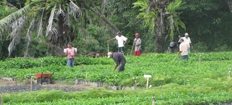 Rio Kama plantation