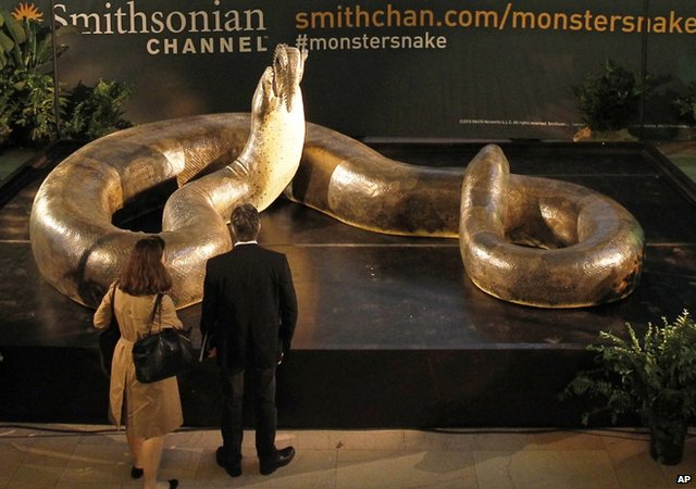 titanoboa in display