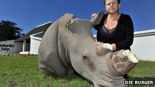 Susan Lottering with the dehorned fibreglass rhino