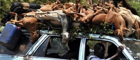 A car transporting goats is pictured on a street in Bamako on April 2, 2012.
