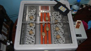 The incubator used by Owen Joiner, who nurtured the rare eggs for two months in an improvised breeding and hatching facility in his hotel room