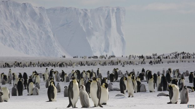 Emperor penguins on the sea ice close to the UK&#039;s Halley Research Station