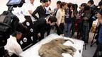 Journalists taking photos of baby mammoth Lyuba in Hong Kong, 10 April 2012