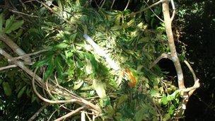 Orangutan nest (c) Adam van Casteren