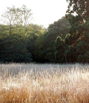 Langley Park (Image: BBC)