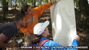 Field assistants check their drag-cloth for ticks in a Tennessee forest.