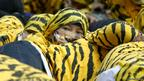 An Indonesian Greenpeace activist wearing a tiger suit