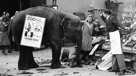 Rosie the elephant advertising a Surrey zoo attacks a fruit stall in 1932