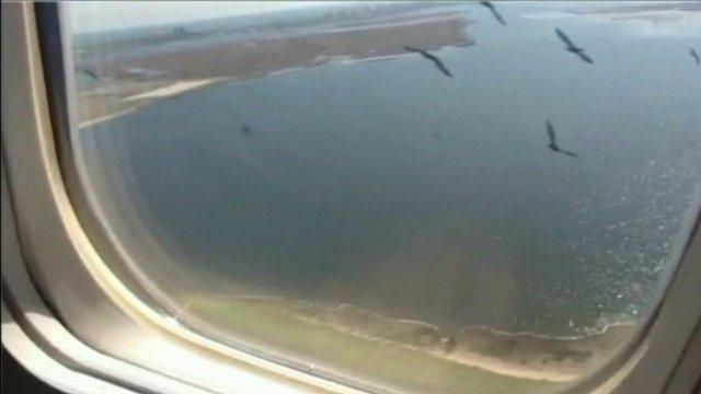 Birds outside plane window