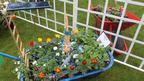 A Tom Daley model dives into a wheelbarrow of flowers