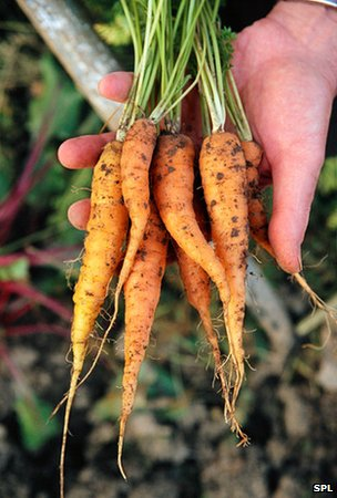 Organic carrots