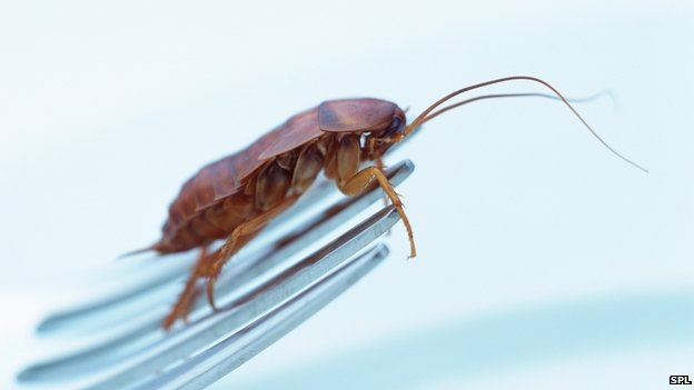 Cockroach (copyright: SPL)