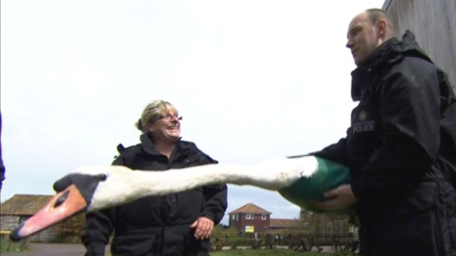 Police officers learn how to handle swans