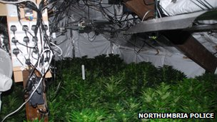 Cannabis Farm Found in Sunderland Leads to Nine Arrests