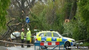 The tree which fell in Odiham