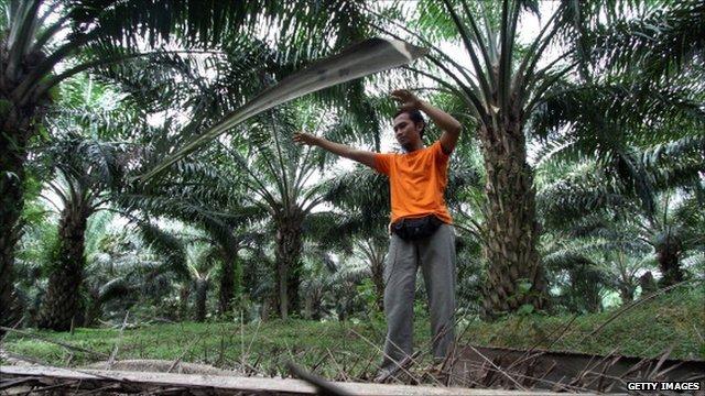 A palm oil farmer in Malaysia
