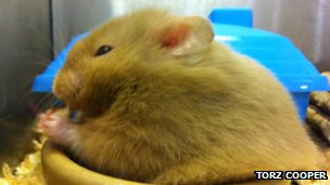 Picture of the hamster which gnawed its way through car