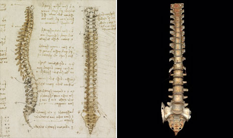 Da Vinci sketch of a spine and a CT image of one