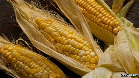 Sweetcorn Ashworth from the book Heritage Fruit & Vegetables by Toby Musgrave