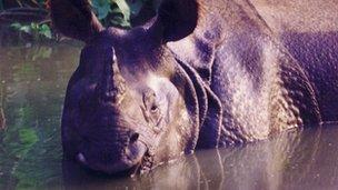 Library image of a rhino, Nepal (Image: BBC)