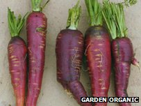 Purple Afghan carrots