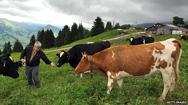 Farmer and cows in Switzerland