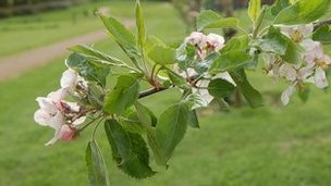 Fruit trees in the community orchard