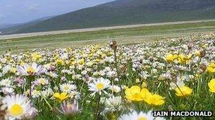 Flowers in Western Isles