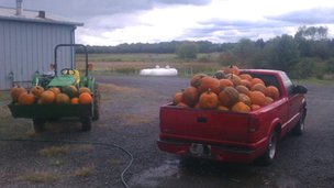 Locally grown pumpkins destined for markets sourced by Blue Ridge Produce