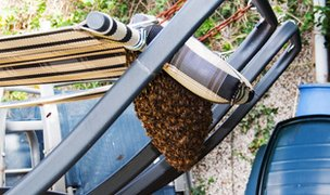 Bee swarm on a sun lounger
