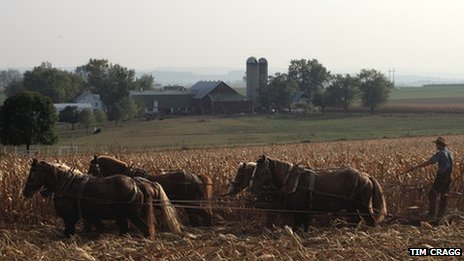 An Amish man using horses to harvest crops
