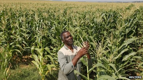 A farmer in South Africa's Eastern Free State, April 2012