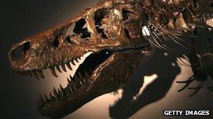 Tyrannosaurus rex Sue seen at the Dinosaur Expo 2005