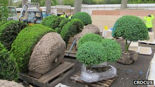 Topiary root balls ready for transport