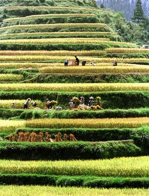 Terraced fields, China (Image: AP)