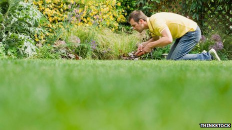 Man on his knees trimming a lawn