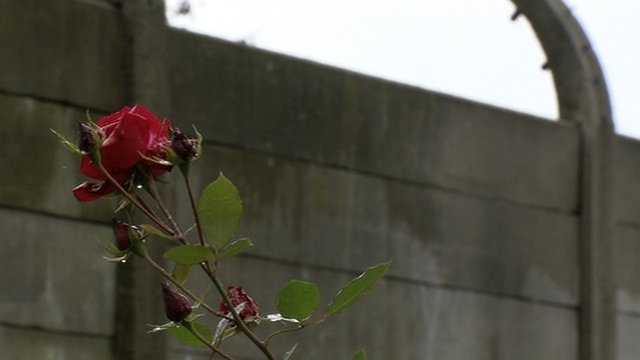 A rose growing in the Auschwitz villa garden