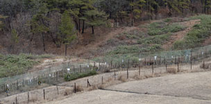 DMZ in Korea