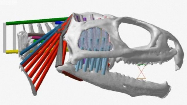 Digital model of a tuatara skull