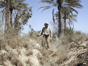 A man walks through a dried-out palmgrove near Baqouba, Iraq (file)
