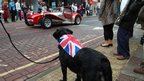 Dog watching the parade