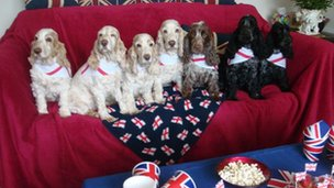 Dogs on a sofa at a Jubilee party