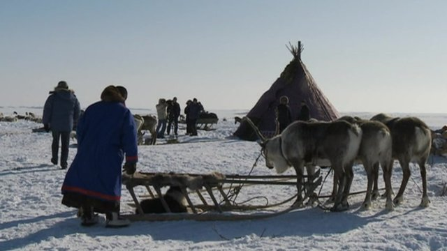 Reindeer herders in the Arctic