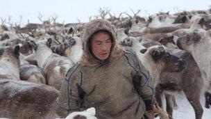 A Nenets reindeer herder