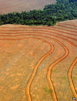 Deforested area, Brazil (Image: AP)